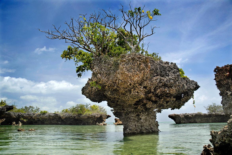 Photograph Coral bay, Zanzibar by Tibor Mester on 500px