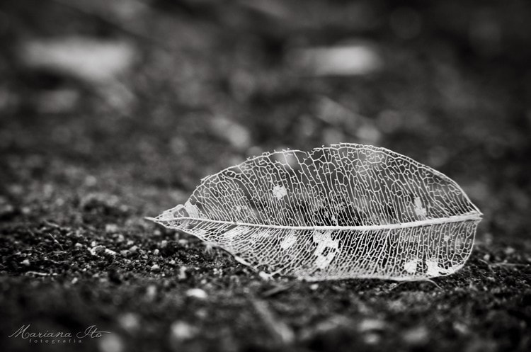 Photograph Leaf by Mariana Ito on 500px