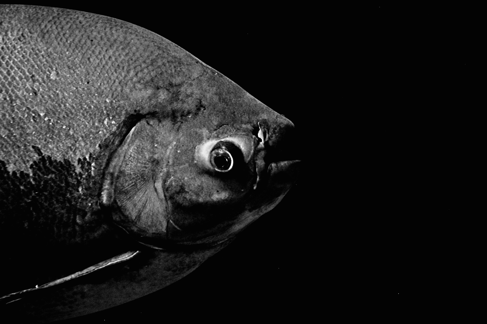 Photograph Portrait of a Fish by Alice Parker on 500px