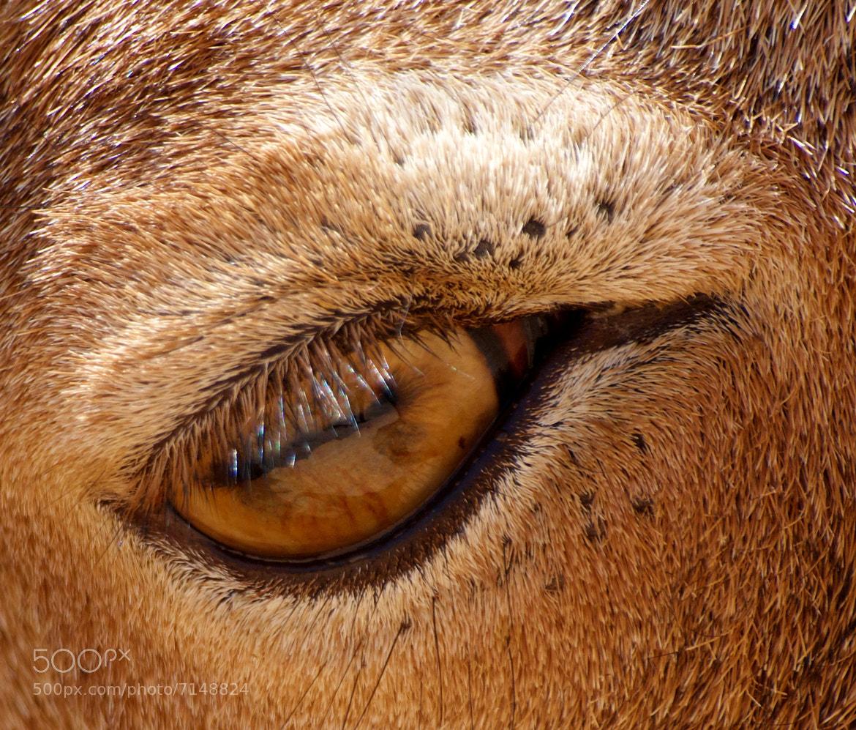 Photograph Eye ! by jamil ghanayem on 500px
