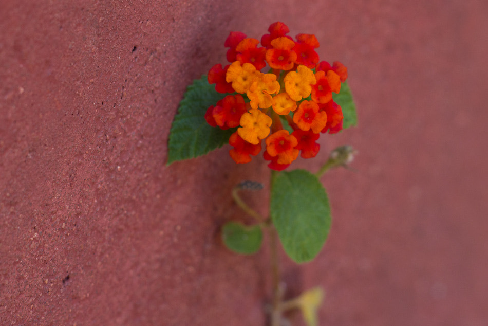 Photograph Flower on the ground by Manohar Singh on 500px
