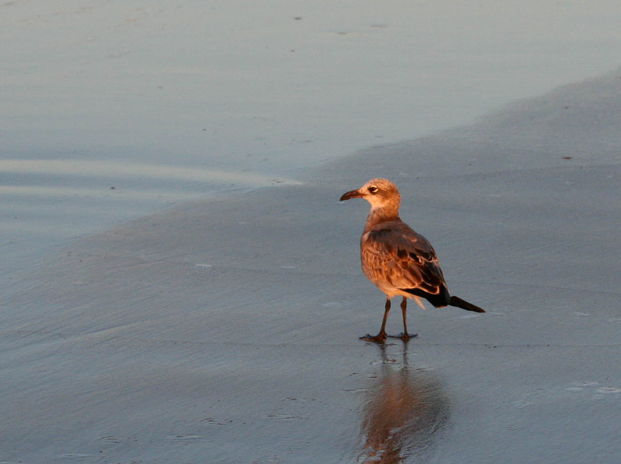 Picture of a shorebird taken at dawn
