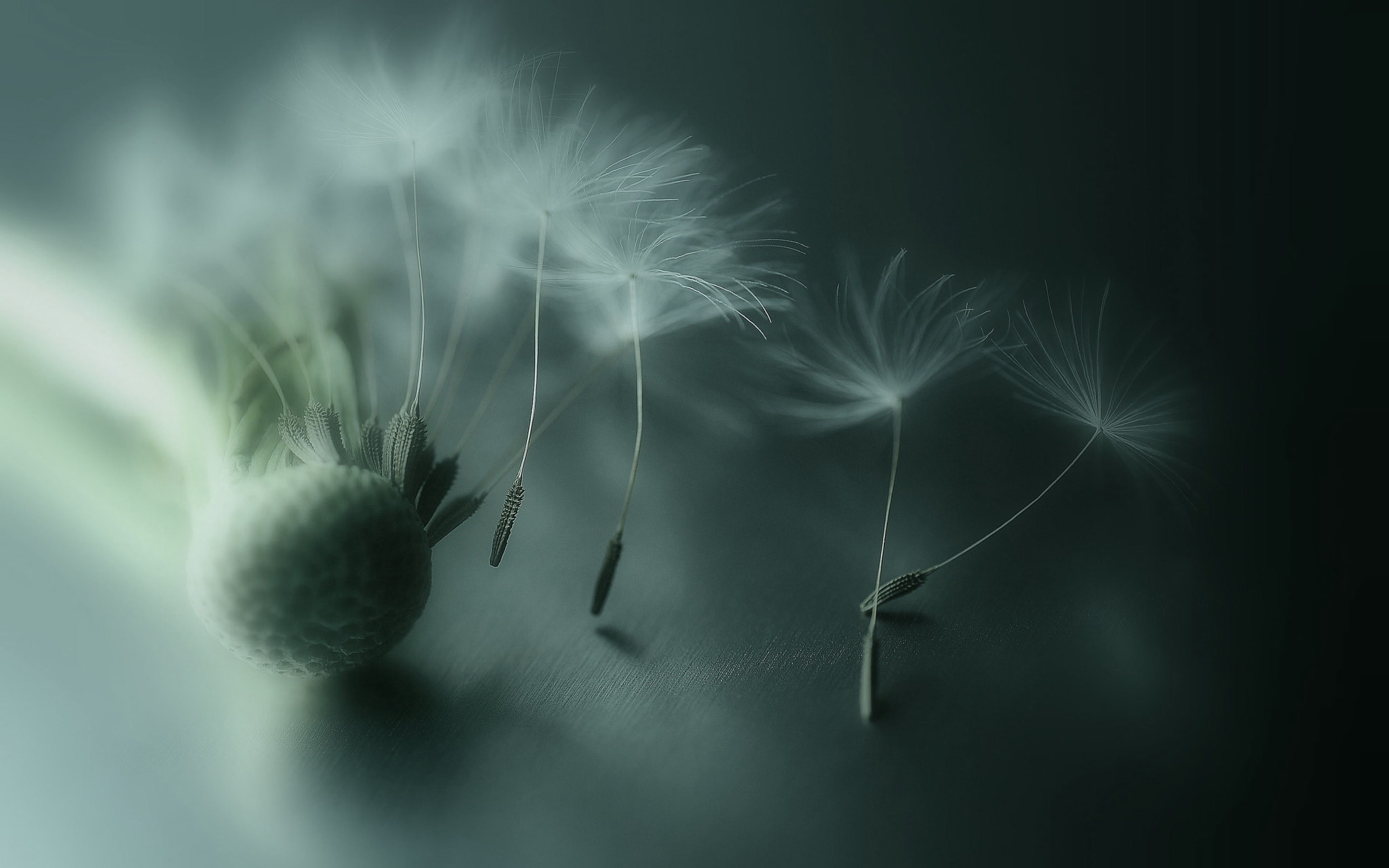 Photograph Dreams of flying by Lafugue Logos   on 500px