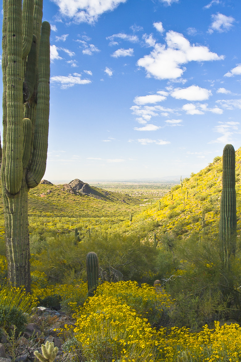 Photograph Spring in the Desert by Tom Roche on 500px
