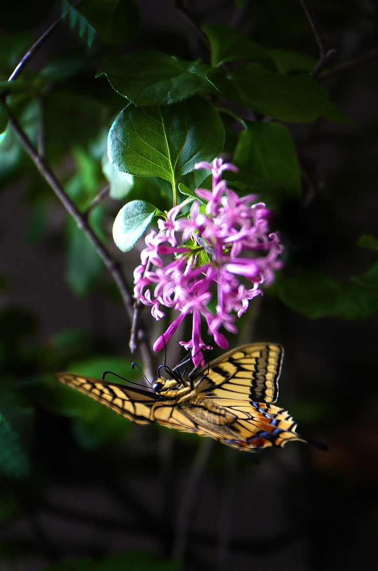 Photograph a butterfly  by junichi kimura on 500px