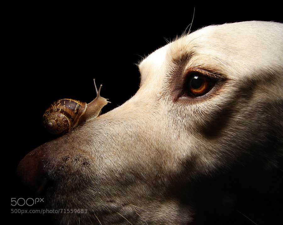 Photograph Snail and Dog by Scott Cromwell on 500px