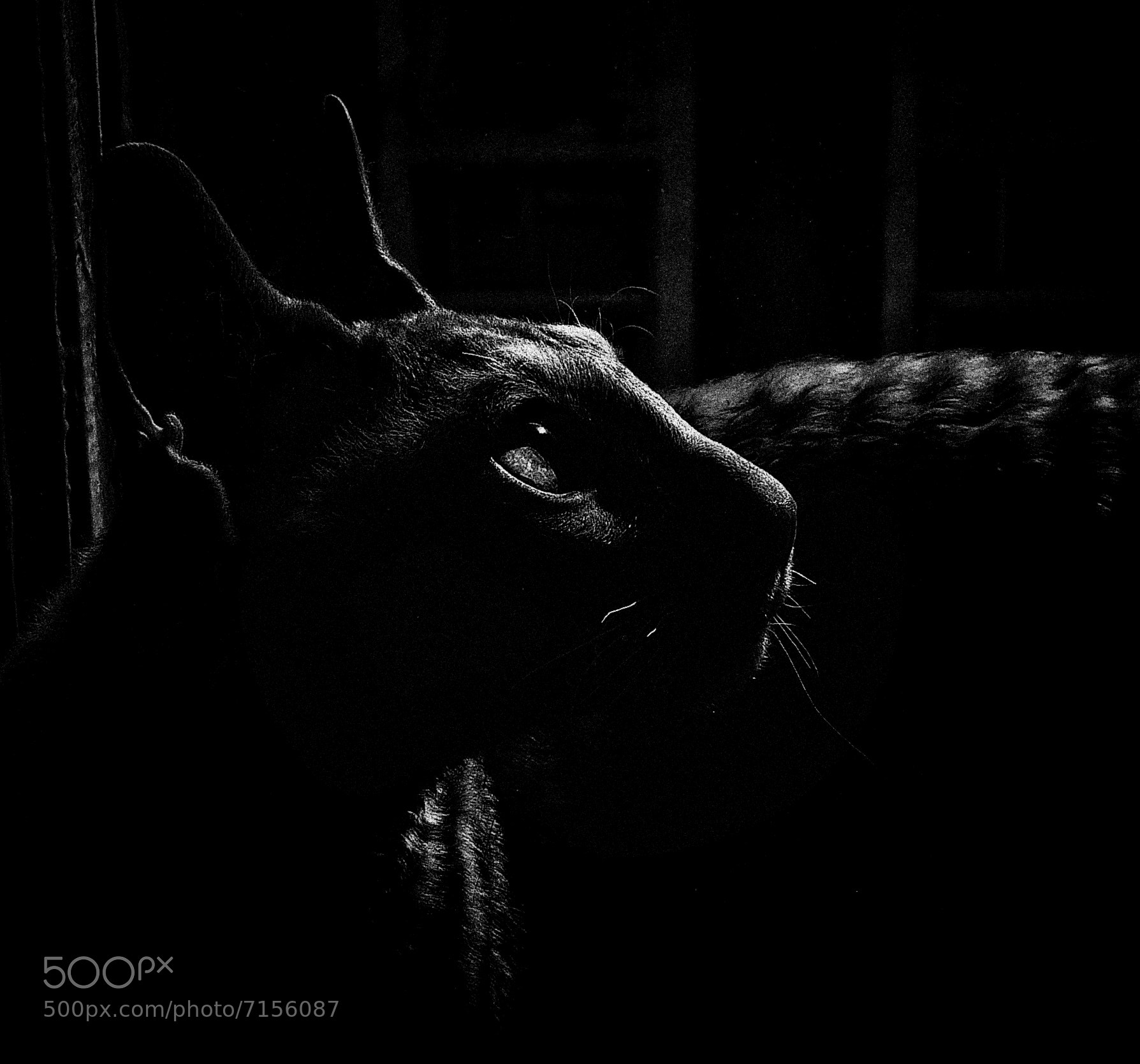 Photograph His name - Sheltn Small Magiс Bast  (limited edition fine art prints available) by Key GROSS (Konstantin Smirnov) on 500px