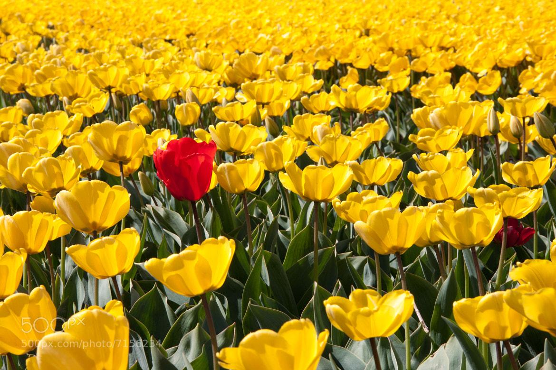Photograph Red intruder by Jeroen van Bakel on 500px