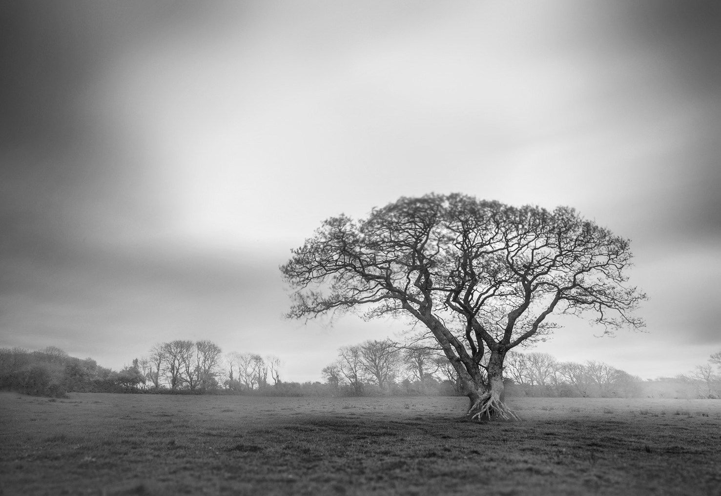 Photograph one, two, tree #7 by Andy Lee on 500px