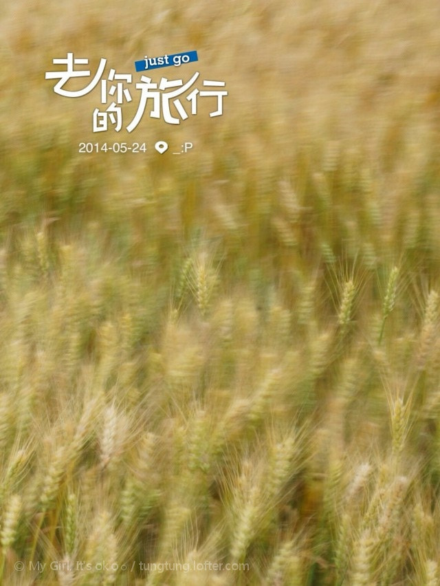Photograph  舞动的麦田  by W-F-Wight_oO on 500px