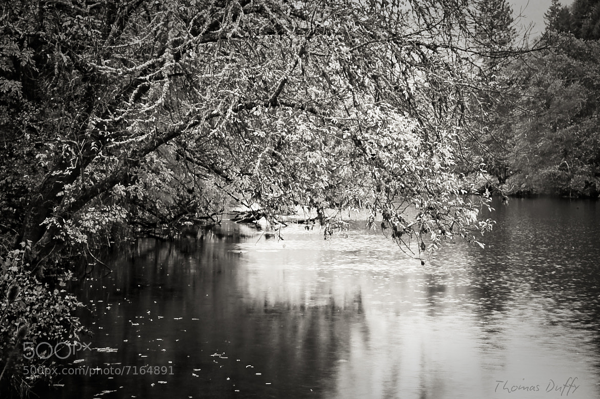 Photograph Fall in Black and White by Thomas Duffy on 500px