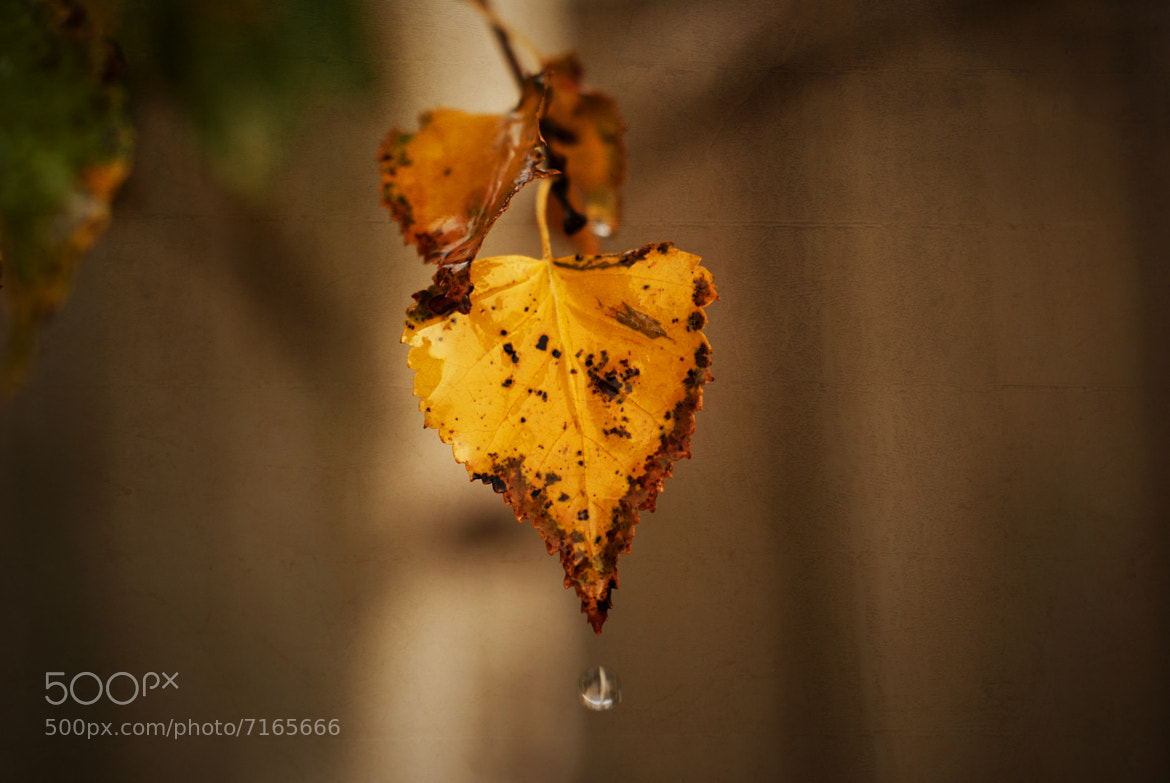 Photograph Autumn Leaves by Ewan Arnolda on 500px