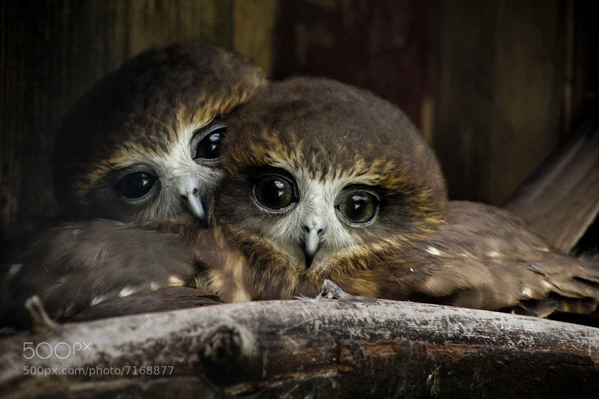 Photograph Love Birds by Ross Van der Watt on 500px