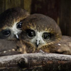 Love Birds by Ross Van der Watt (fool)) on 500px.com