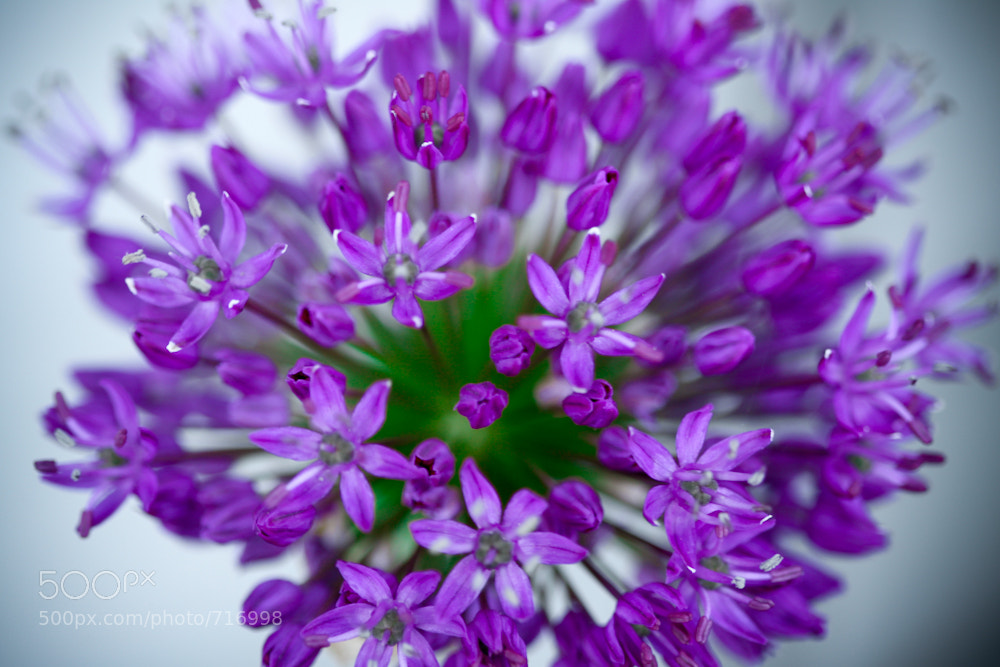 Photograph Bloomin' Onion by Crystal Young on 500px
