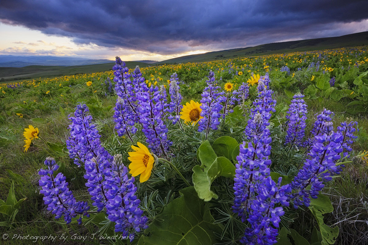 Photograph A windy Day on the Dalles Mountain by Gary Weathers on 500px