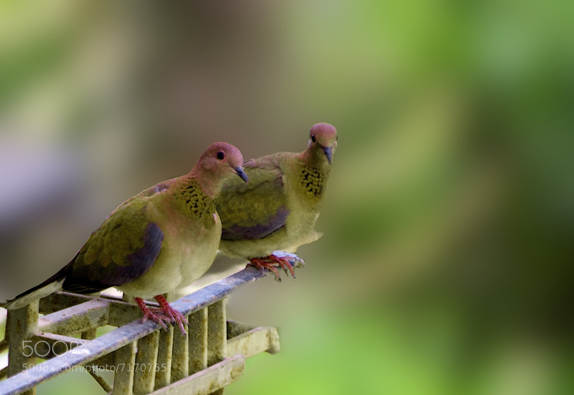 Photograph Birds in love by jamil ghanayem on 500px