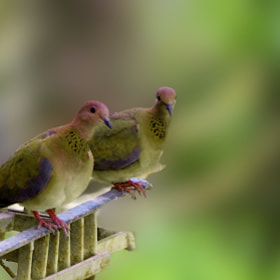 Birds in love by jamil ghanayem (jamiline)) on 500px.com