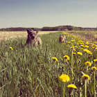������, ������: Summer holiday for the dogs