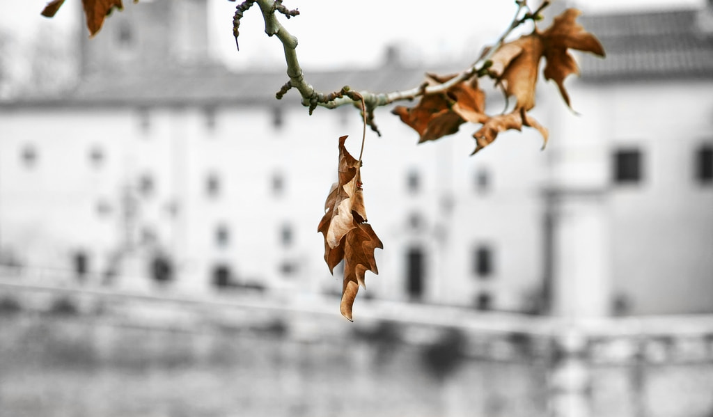 Photograph winter leaf by fiodor m on 500px