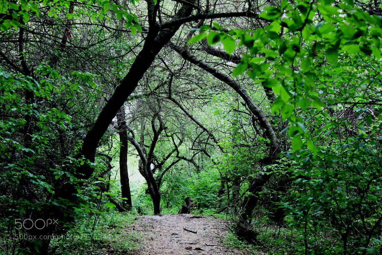 Photograph gate to forest by Jana Gajdosova on 500px