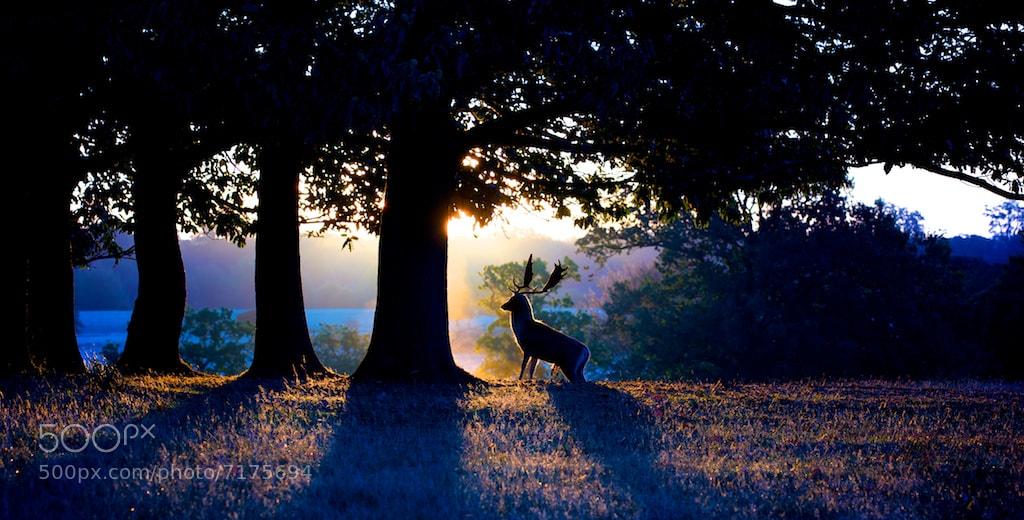 Photograph daybreak colour by Mark Bridger on 500px