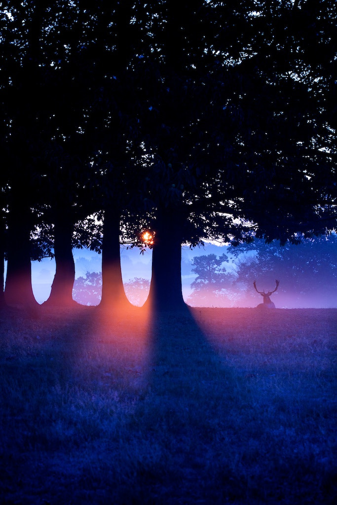 Photograph red and blue by Mark Bridger on 500px