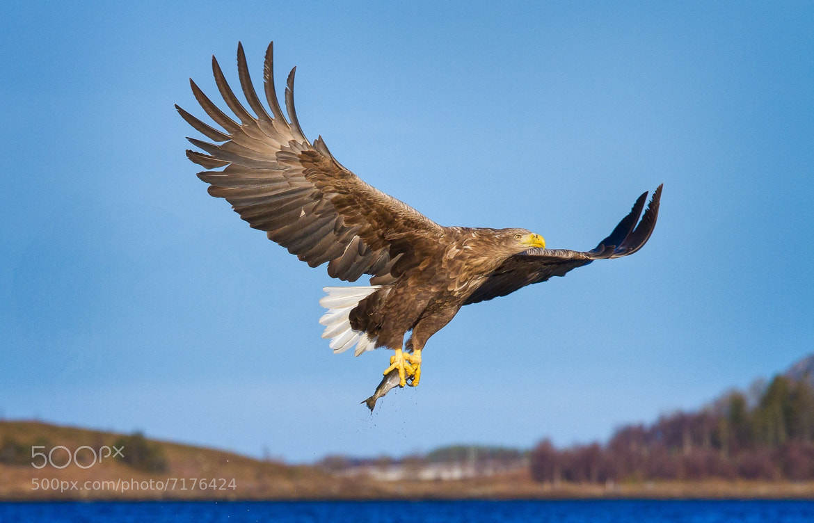 Photograph Catch of the day! by Andreas Hemb on 500px