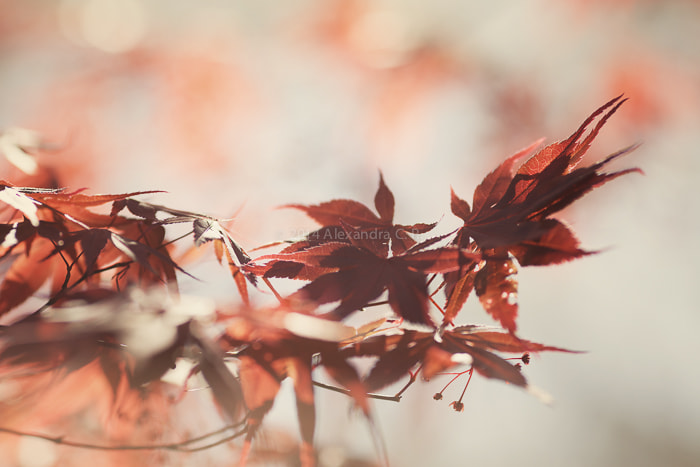 Foliage by Alexandra C. on 500px.com