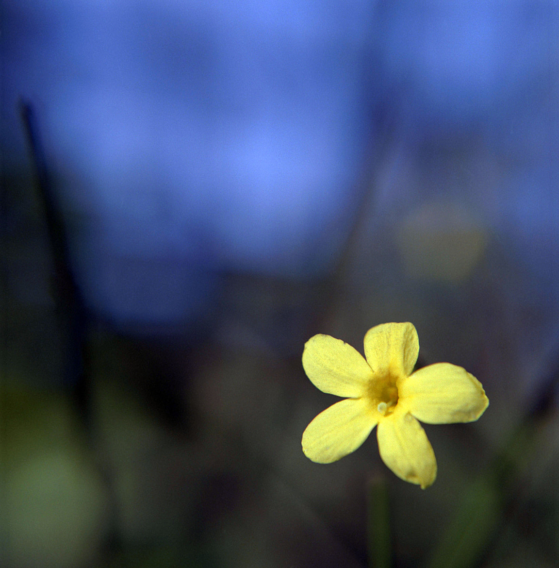 Photograph Yellow and Alone by Becca Gulliver on 500px