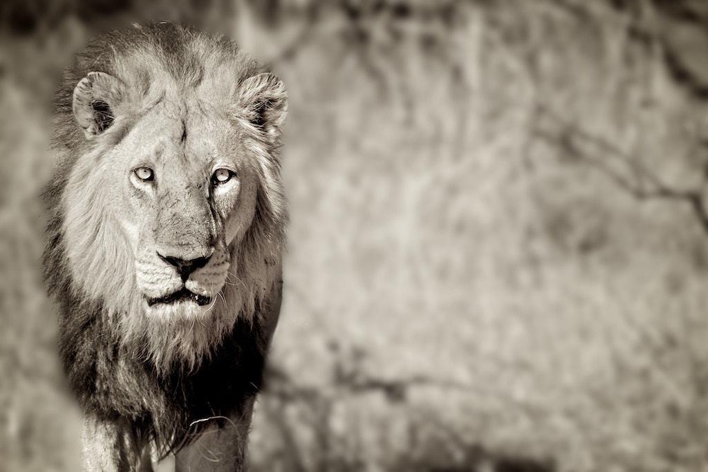 Photograph Here Comes The King by Fabien Depasse on 500px