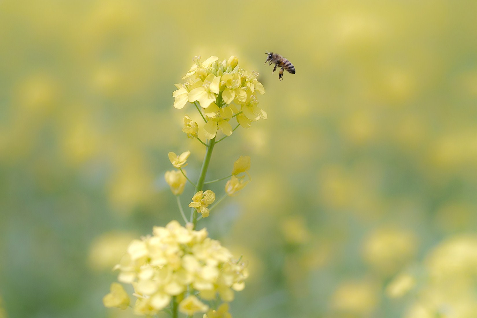 Photograph Busy bee by _TAKA TEN_ on 500px