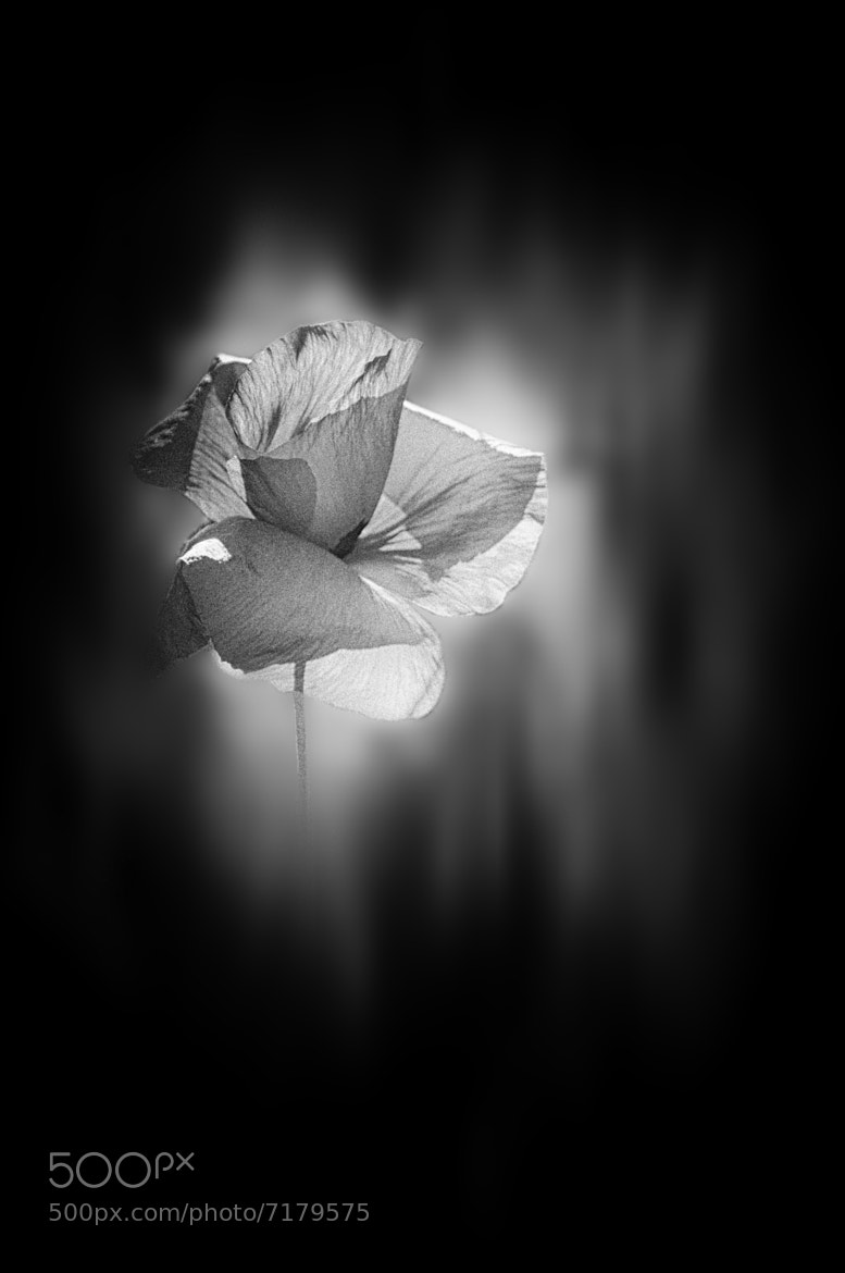 Photograph transparency by Silena  Lambertini on 500px