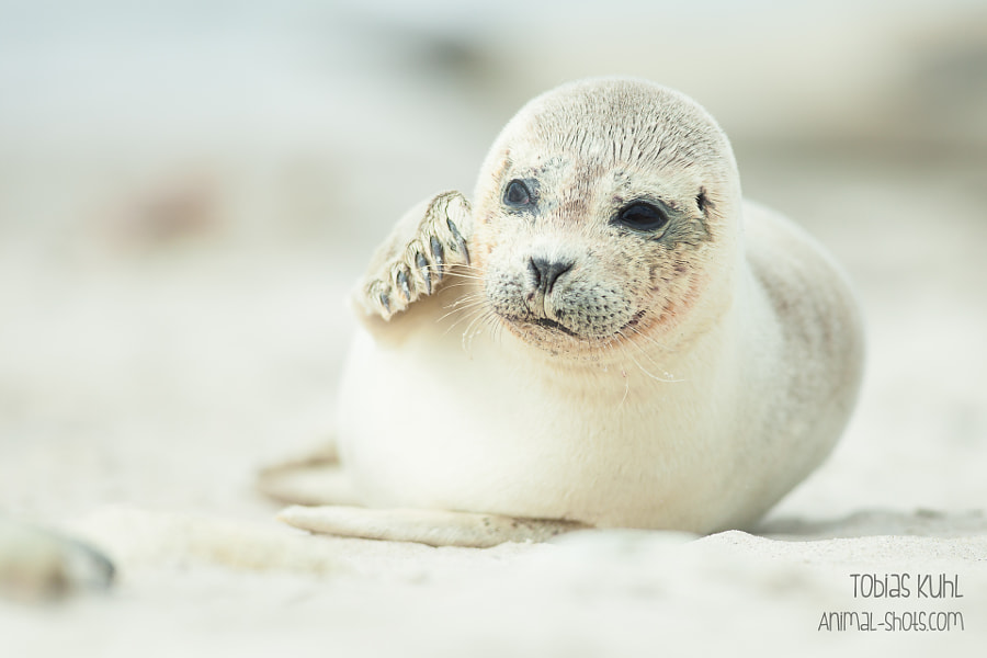 Photograph Seal by Tobias Kuhl on 500px
