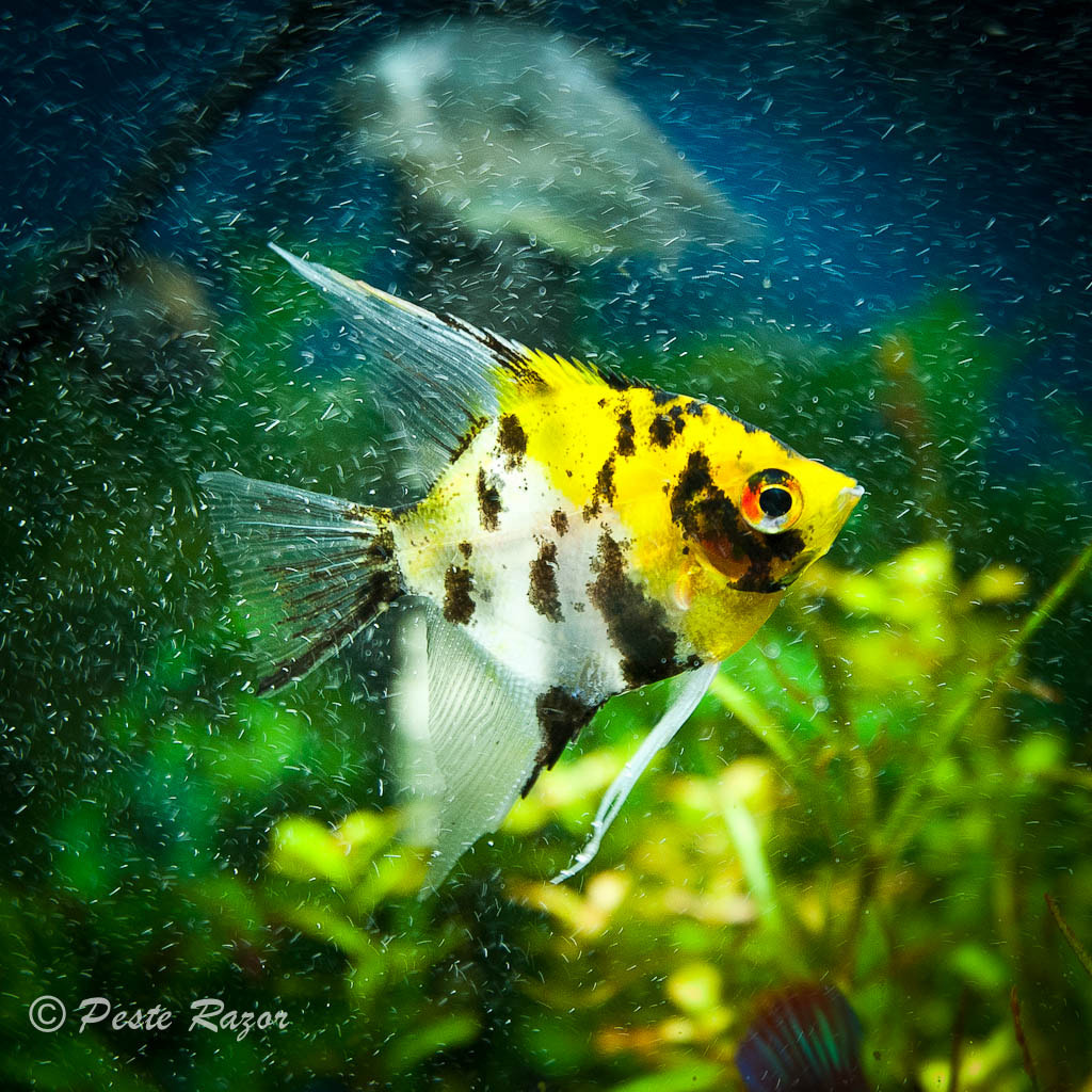 Photograph Fish by Peste Razor on 500px