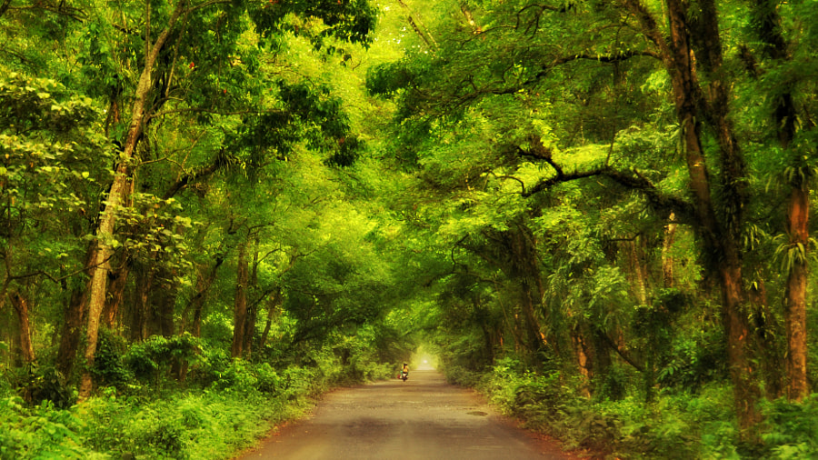 Inside Chilapata Forest Range by Ghose & Co on 500px.com