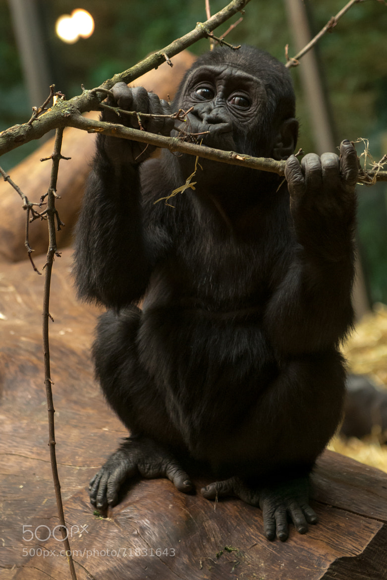 Photograph Can I play with this branch by Fritz Dällenbach on 500px