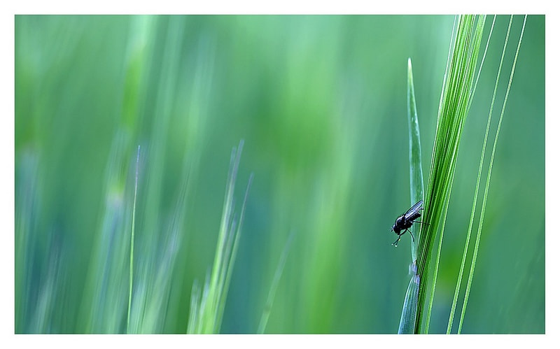 Photograph into the world by Yohanna Del'heaumeau on 500px