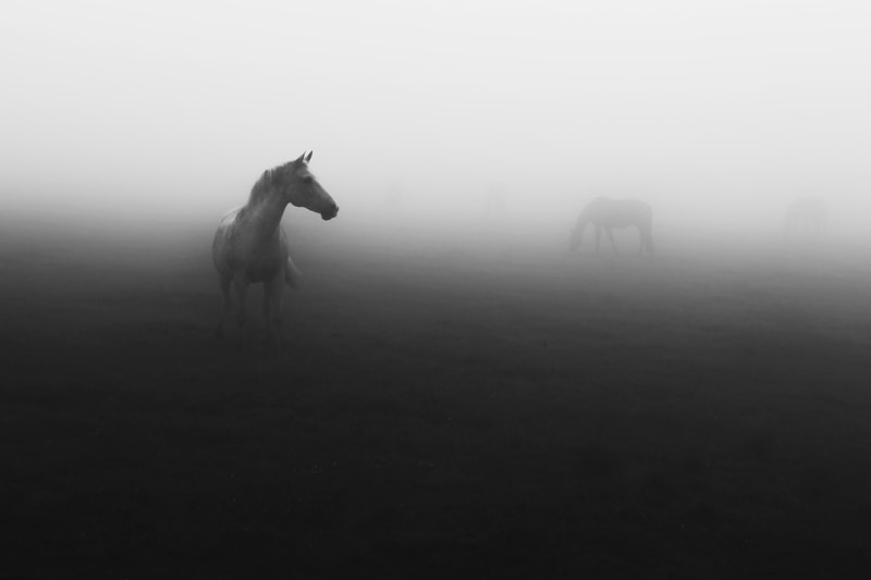 Photograph *** by Jelena Stoll on 500px