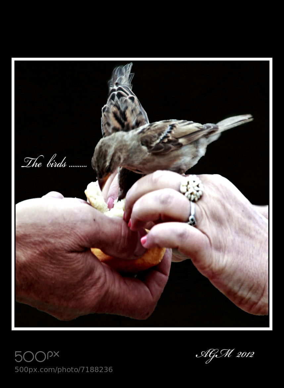 Photograph The birds by Antonio Garcia on 500px