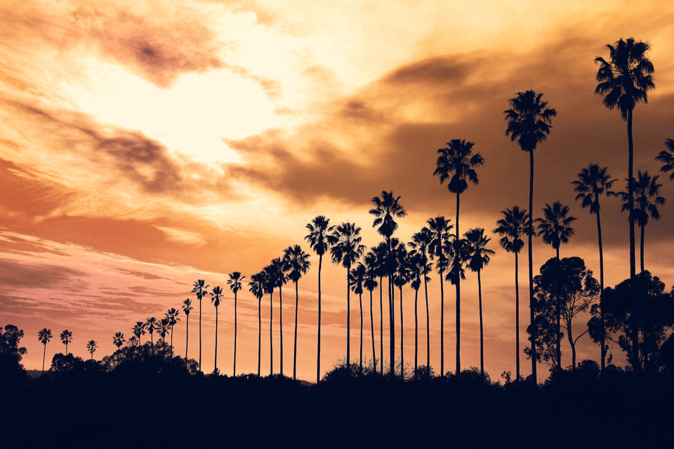 Photograph Palm Trees  by Phyo Wai on 500px