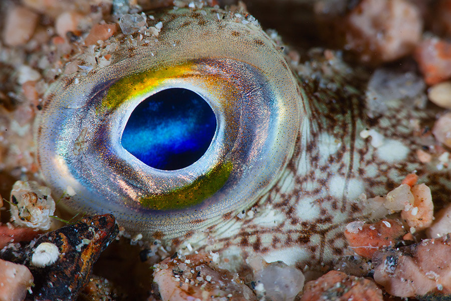 Photograph Space in the eyes by Andrey Narchuk on 500px