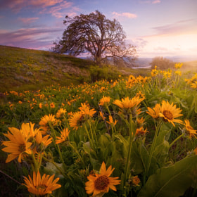 Open Spaces by Ryan  Dyar (RyanDyar)) on 500px.com