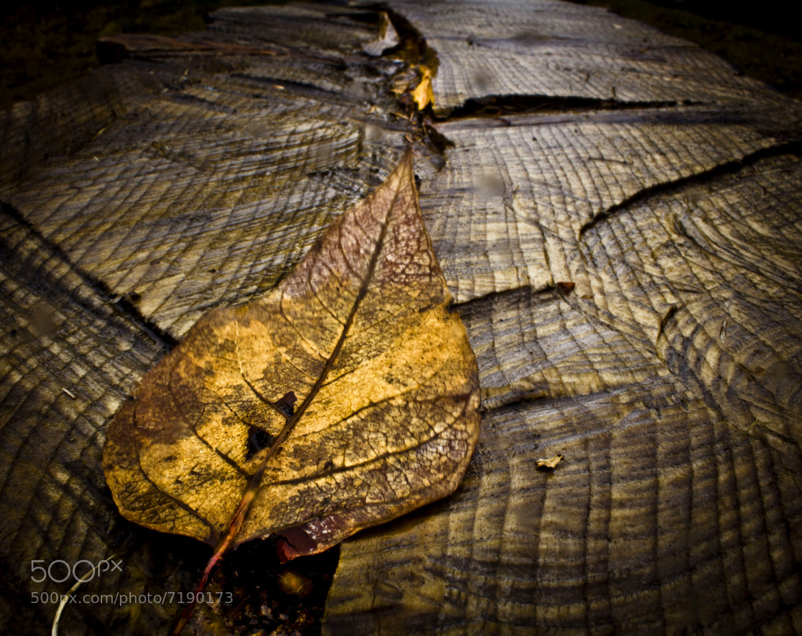 Photograph leaf by Torfi Matthíasson on 500px