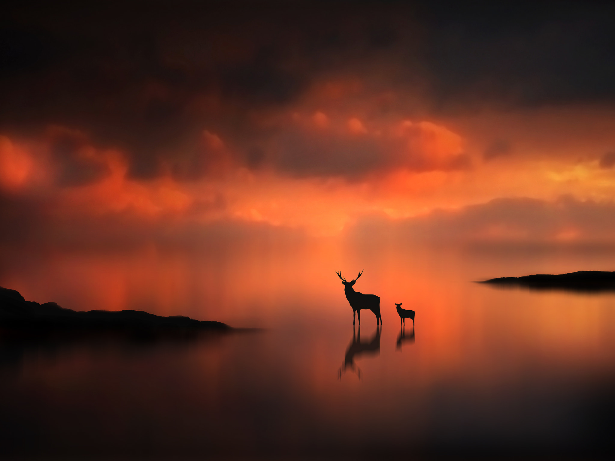 Photograph The Deer at Sunset by Jenny Woodward on 500px