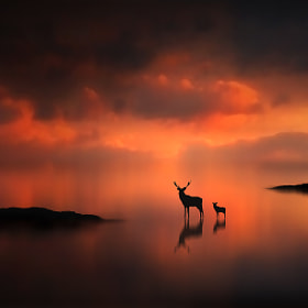 The Deer at Sunset by Jenny Woodward (jenny4)) on 500px.com
