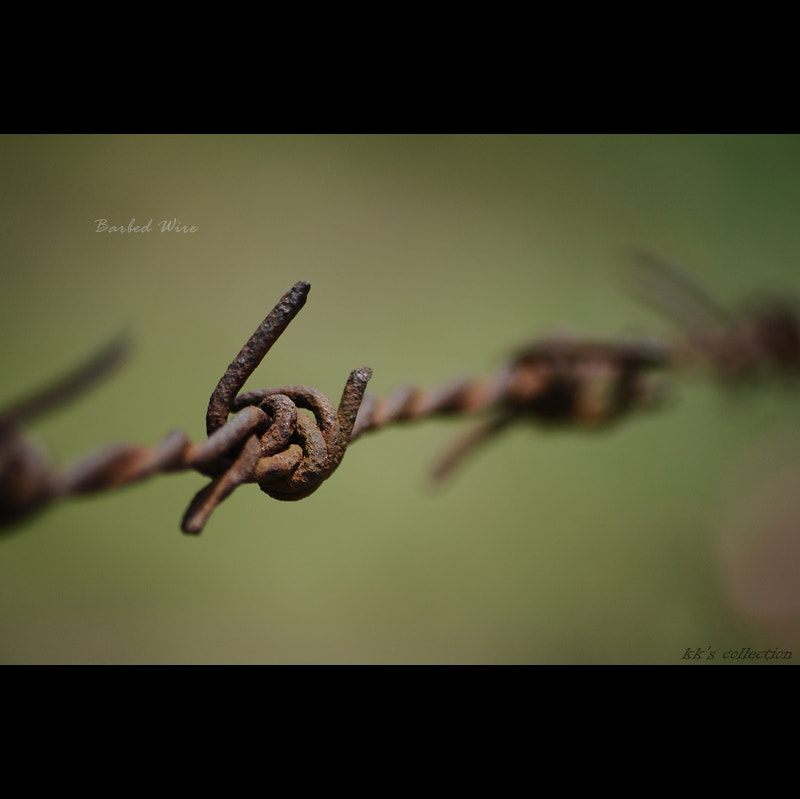 Photograph Barbed Wire by Kishore Basak on 500px