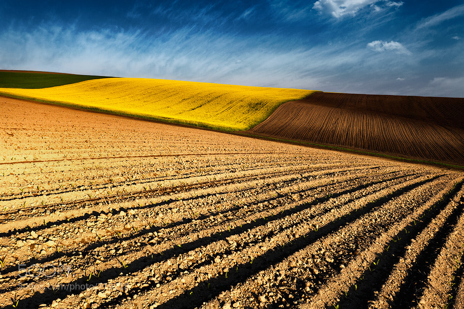 Photograph Spring fields by Evgeni Dinev on 500px