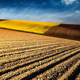Spring fields by Evgeni Dinev (evgord)) on 500px.com