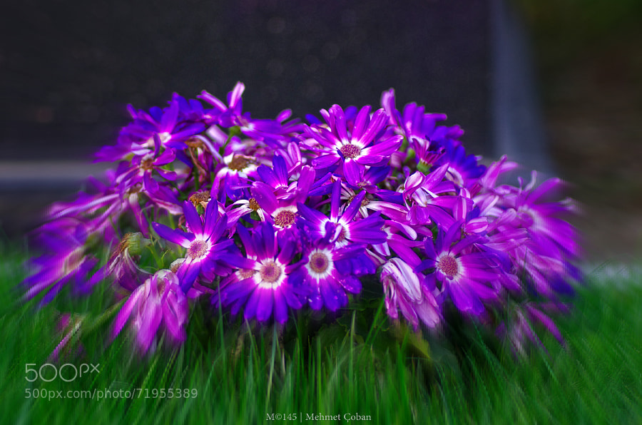Photograph bunch of purple by Mehmet Çoban on 500px
